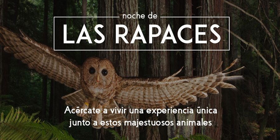 Aves-rapaces